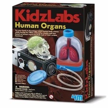 4m-fm374 kidzlabs human organs